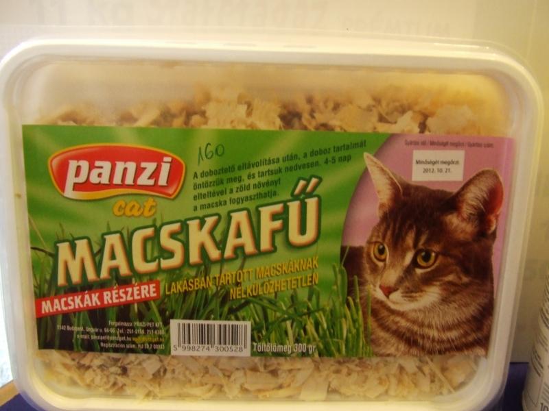 Panzi Macskafű