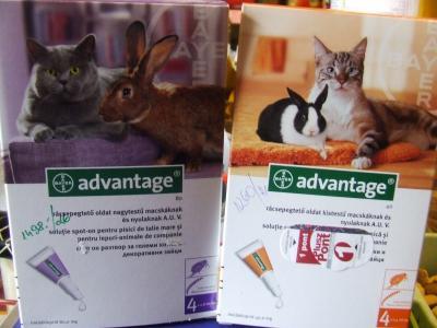 Advantage ampulla 40 (Macska, nyúl számára) bolha ellen 0,4 ml