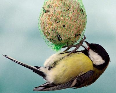 100 db-os faggyúgolyó madár eledel